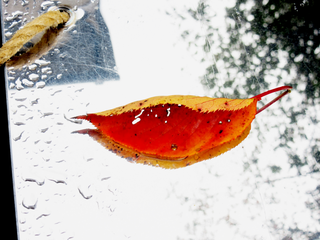 autumn-color-on-a-metal-board-after-the-rain-by-Raburadohl.png