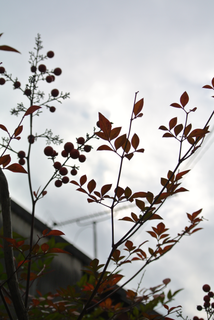 branches-with-brown-leaves.png