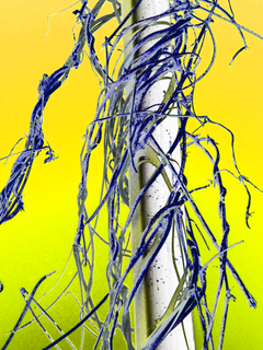 entangled-yellow-background-by-Raburadohl.png