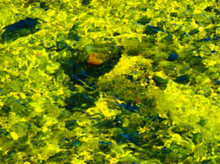 greenish-yellow-and-blue.png