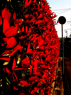 leaves-vivid-red-by-Raburadohl.png