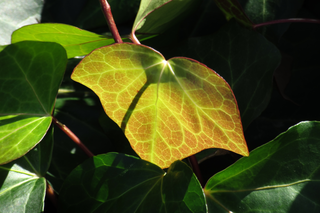 leaves-with-light-by-Raburadohl.png