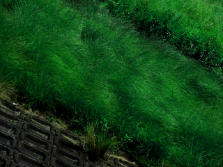 riverside-weeds-retouched-to-unreal-blue-green-by-Raburadohl.png