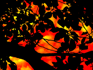 silhouette-red-orange-sky-beyond-by-Raburadohl.png