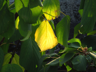 spotlight-on-yellow-leaf-by-Raburadohl.png