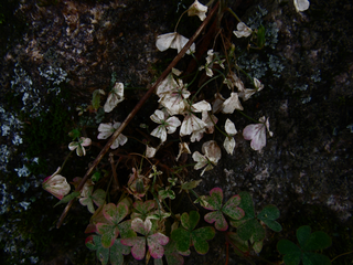 tiny-dusty-flowers-and-leaves-by-Raburadohl.png