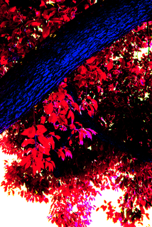 tree-and-leaves-red-and-blue.png