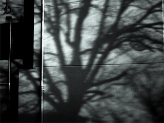 tree-shadow-glance-from-by-Raburadohl.png